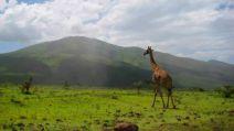 Южна Африка с парка Крюгер, Зимбабве с водопада Виктория и Ботсвана